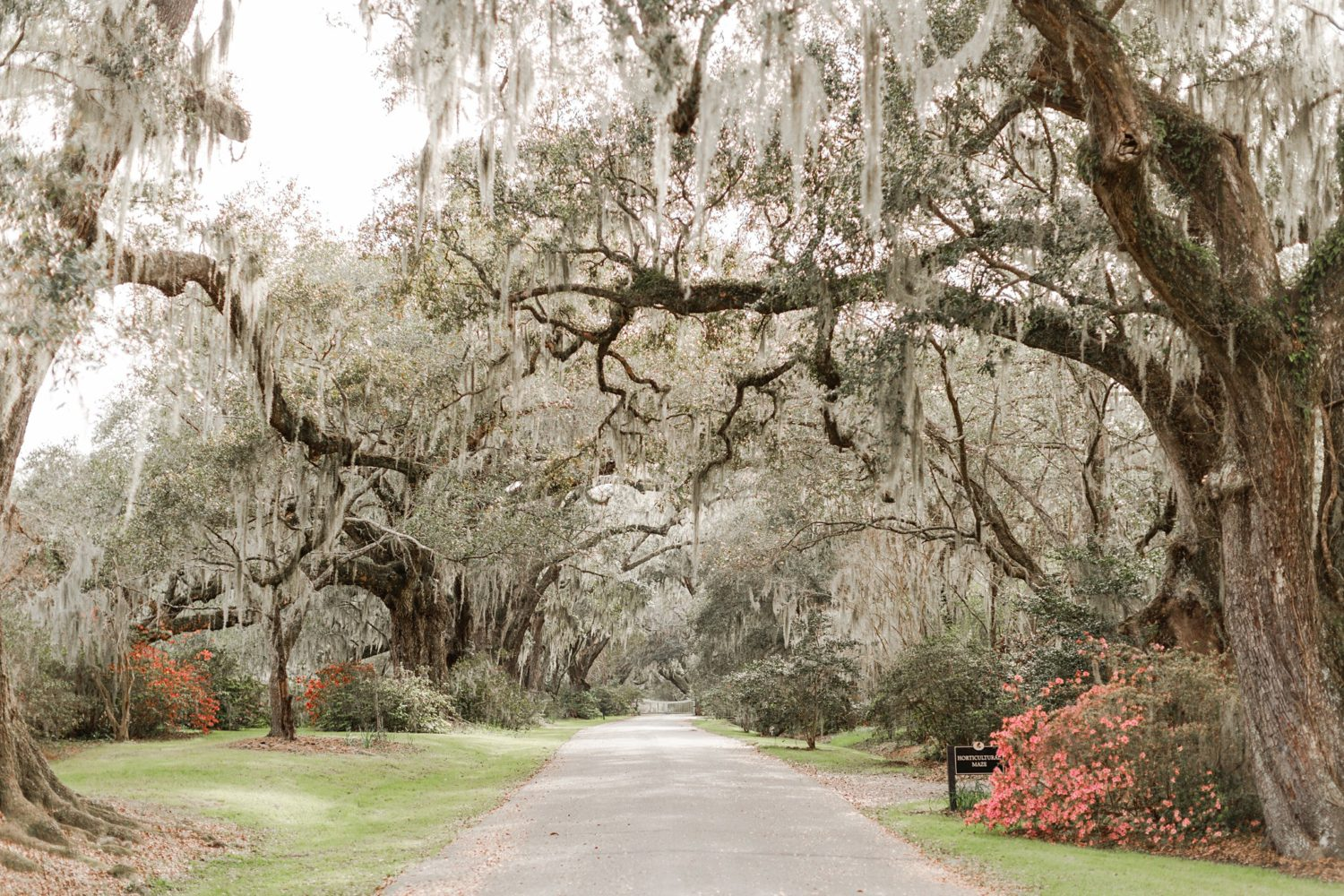 A Charleston, South Carolina Travel Guide for Photograhers